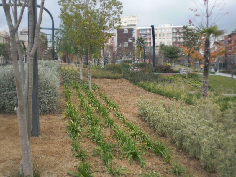 Pompeu fabra plantació.JPG