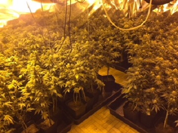 marihuana badalona2 0711.JPG